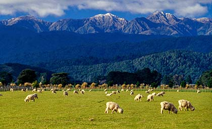 Commissioner releases research on the contribution of New Zealand's livestock methane to global warming